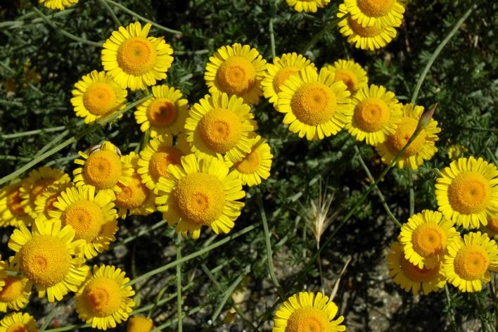 Gele Keuken 8 : Over cultuurplanten