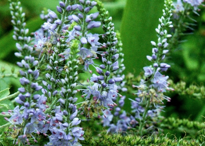 beschermde plantensoorten nederland